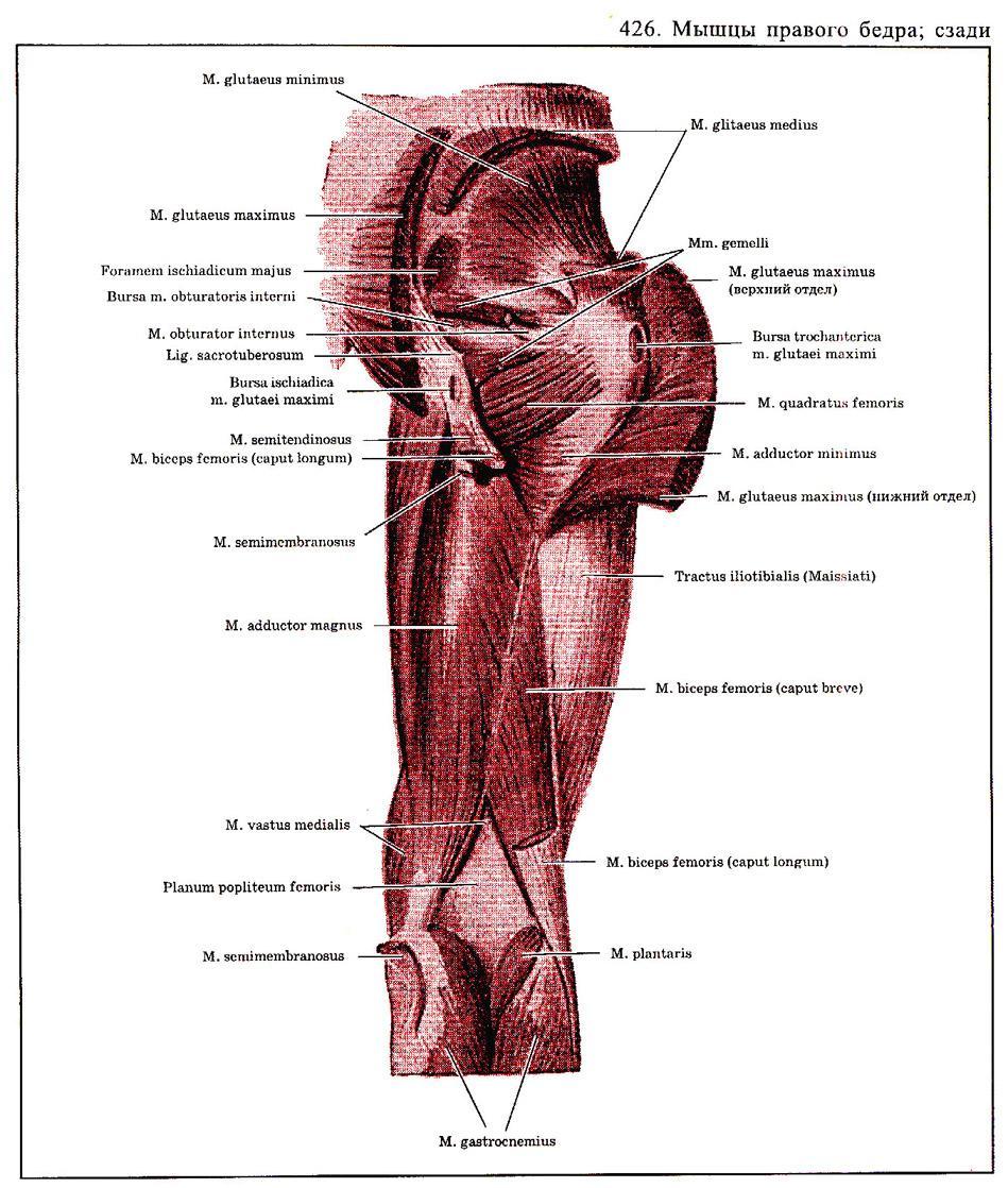 Мышцы вагины добавила