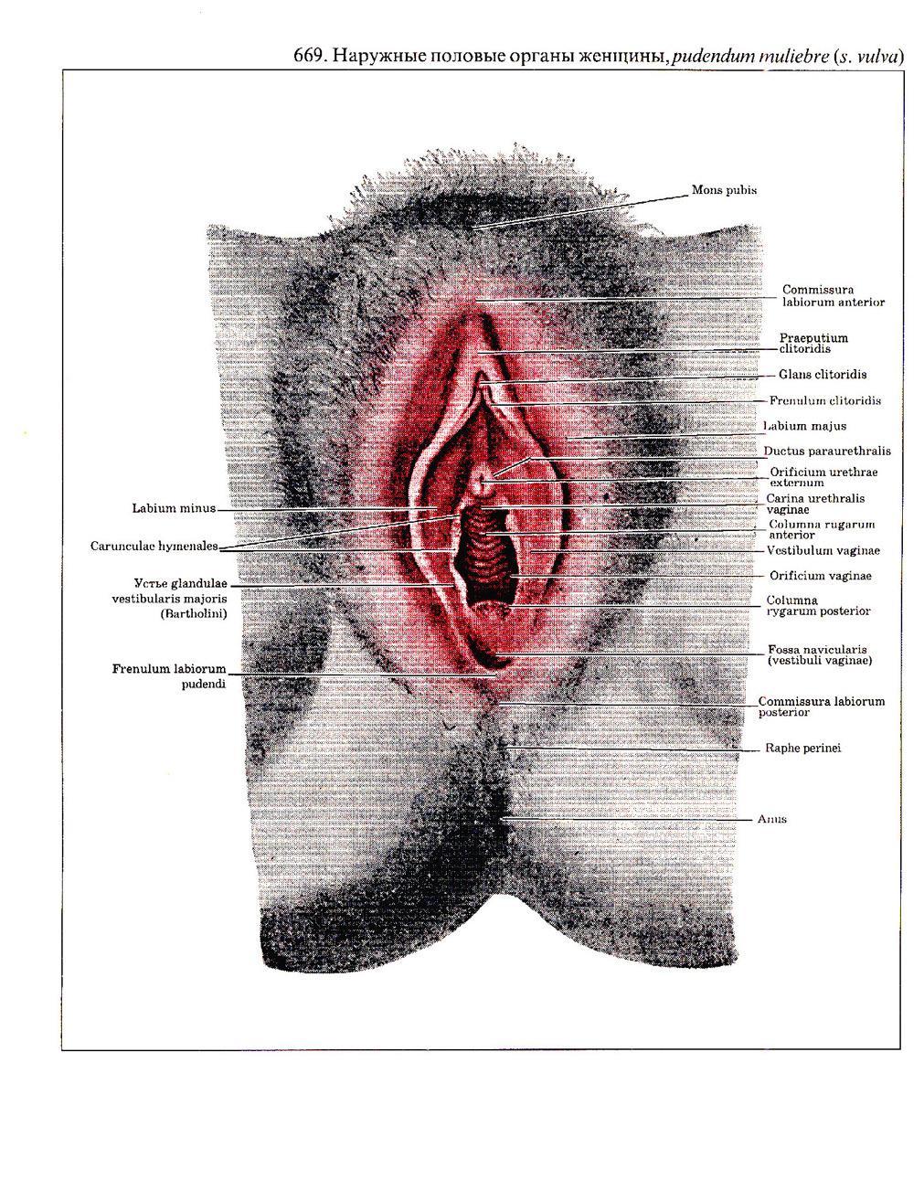 Признаки определяющие глубину влагалища у женщин 17 фотография