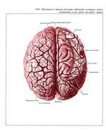 Схема оболочек мозга