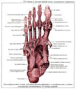 Пяточно-кубовидный сустав противовоспалительные суставные препараты