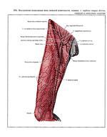 Коллабирование нижней полой вены